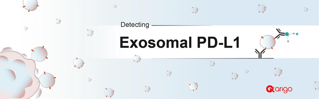 Exosomal PD-L1