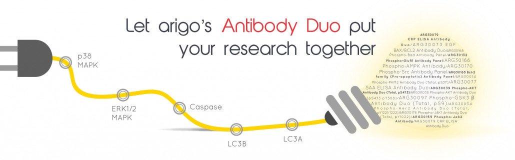 Antibody Duos