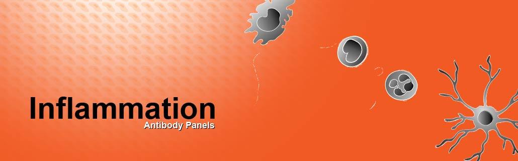Inflammation antibody panels