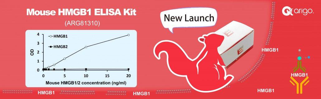 Mouse HMGB1 ELISA Kit ARG81310