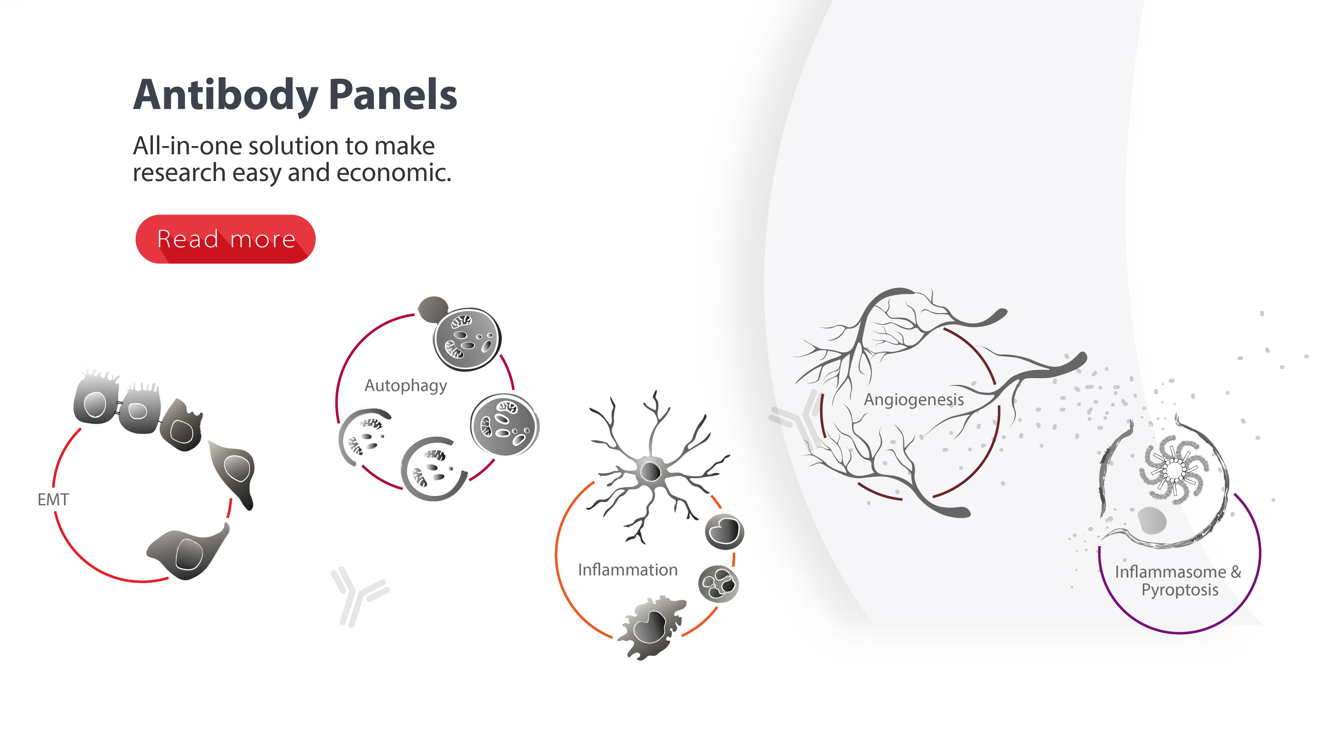 arigo's Antibody Panels